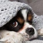 Como aumentar a imunidade do cão em dias de frio?