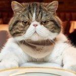 Alimentos proibidos para gatos