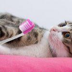 Passos a passo para escovar os dentes do seu gato!