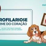 Dirofilariose ou Verme do Coração do Cão